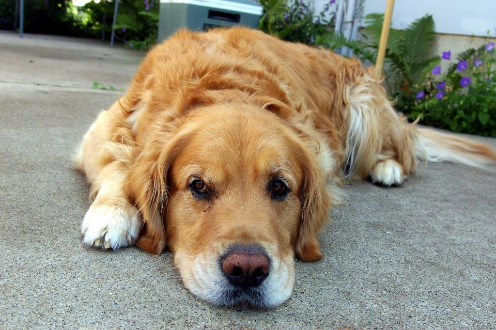 Dogs-Upset-Stomach-1024x681 3 Tips to Cure Your Dog's Upset  Stomach
