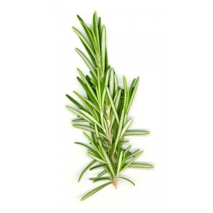 Rosemary 9 Herbs and Spices with Nutritional Superpowers