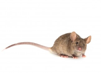 4 Most Dangerous Household Pests (and How to Get Rid of Them)