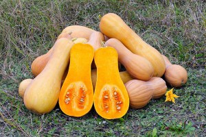 Butternut-Squash-300x200 Wary Of Sun-Tanning Parlours! Fake A Tan With These Foods