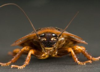 How Home Pests can be Dangerous to your Health
