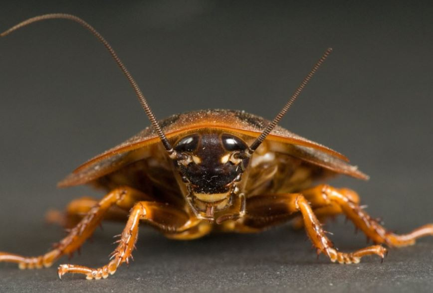 How-Home-Pests-can-be-Dangerous-to-your-Health-1 How Home Pests can be Dangerous to your Health