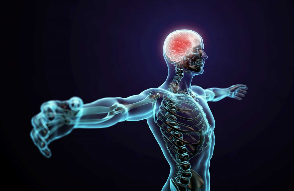 central-nervous-system-1024x667 Neurological Recovery Following a Spinal Cord Injury: Important Facts and Information