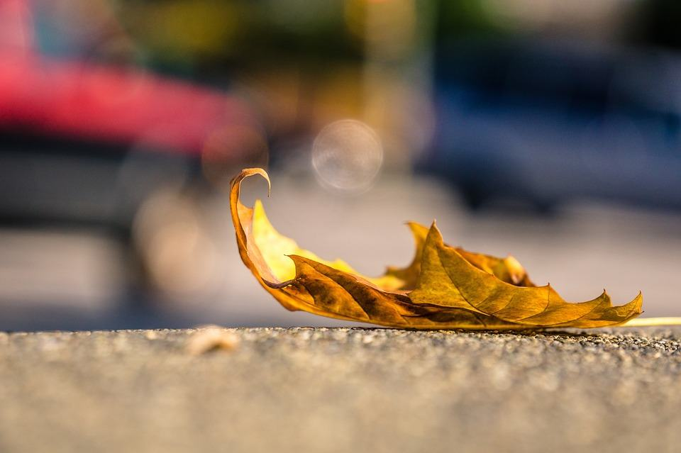 leaf-1082118_960_720 When is Divorce Better than Staying Married