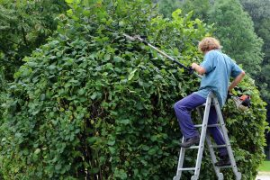 2-1-300x200 Growing Your Health: How Gardening Can Help