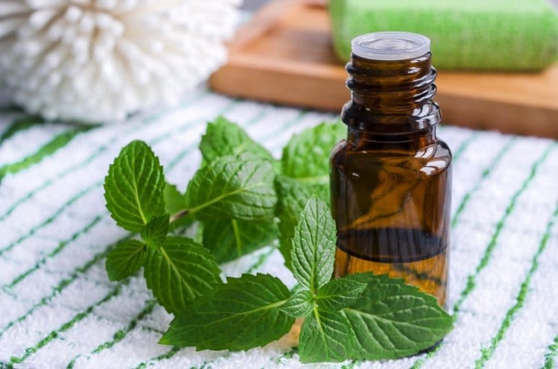 peppermint-to-get-rid-of-nausea 6 Best Essential Oils to Get Rid of Nausea